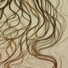 Umyvadlo No.2. Čapek - 2003, umyvadlo , vlasy, 45 x 60 x 30 cm